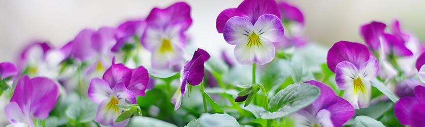 Искусственные цветы фиолетовые
